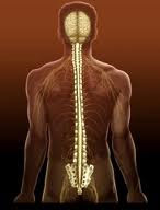 Травма спинного мозга не лишает секса
