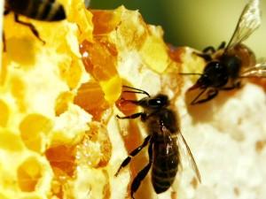 Пчелиный яд – инновационное косметическое средство