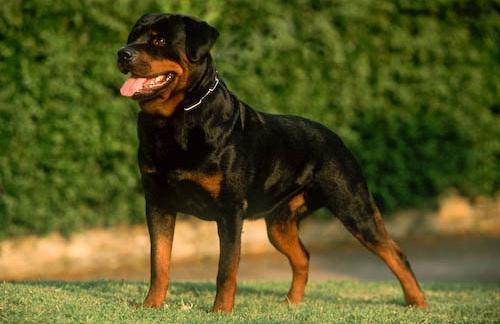 Исследования причин агрессивности собак