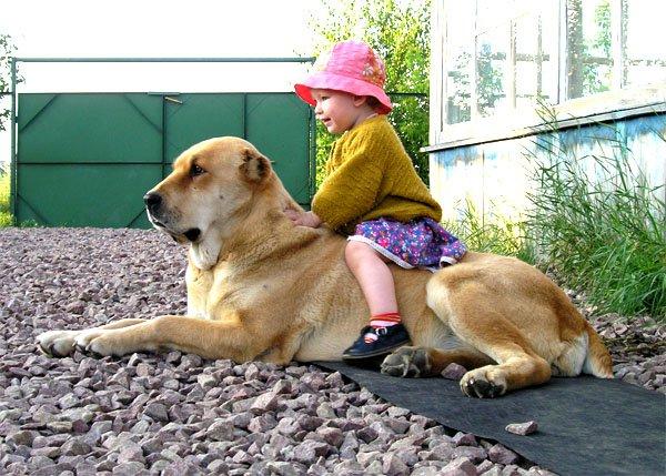 Взаимоотношения ребёнка и домашнего животного