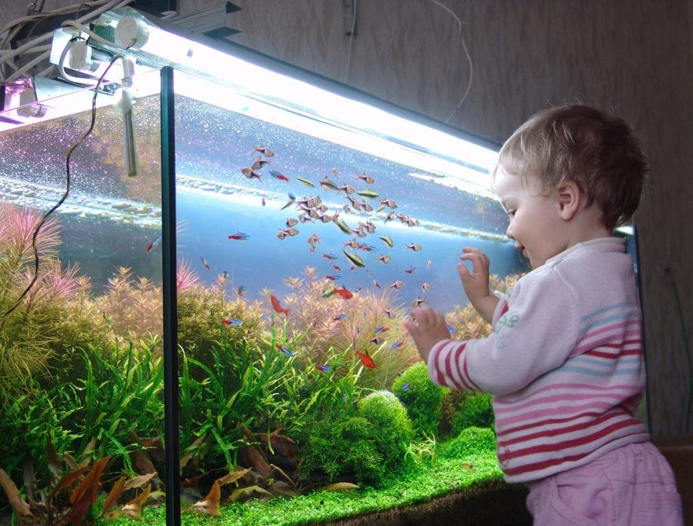 Аквариум приносит огромную пользу ребенку