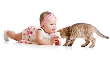 Какую кошку завести для вашего малыша и семьи?