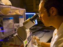 Известное средство для лечения диабета вызывает рак, доказало вскрытие
