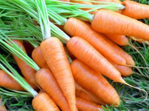 Предупредить рак груди помогут… морковь и картофель