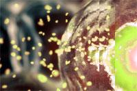 Появилась новая гипотеза относительно факторов риска рака