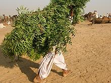 В листьях тропического дерева ним найден противораковый агент