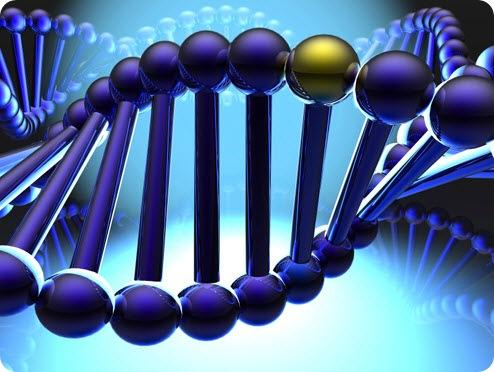 Диабет вылечат с помощью гена