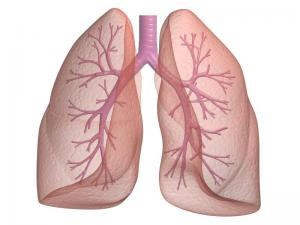 Как защититься от рака легких
