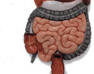 Диабет »рождается» в кишечнике