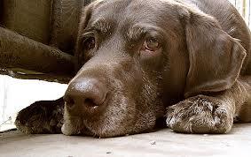 Как вылечить собаку в домашних условиях?