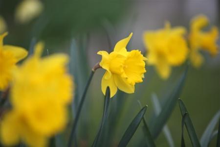 Цветы спасают от рака и слабоумия