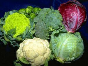 Польза брюссельской капусты при планировании беременности