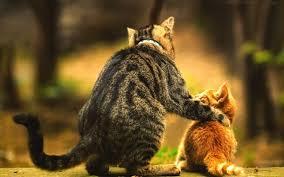 Ребенок хочет завести котенка