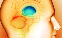 Мозг диабетиков со стажем усыхает вдвое быстрей