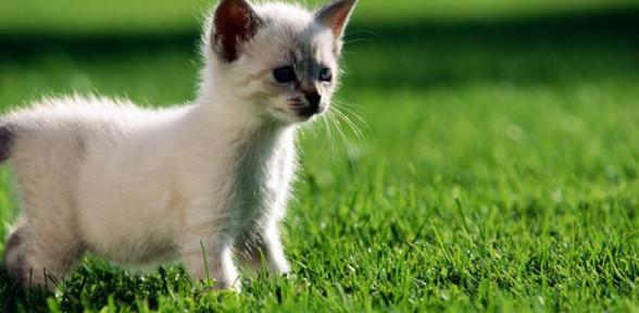 Стоит ли заводить в доме котенка