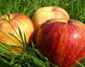 Яблоки снижают риск развития сахарного диабета