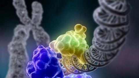 Эпигенетические изменения в ДНК вызывают любые формы рака