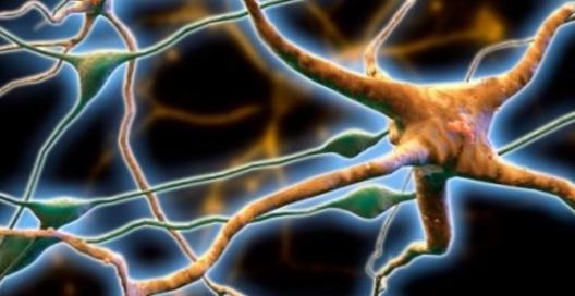 Соединения в марихуане защищают нервную систему против рассеянного склероза