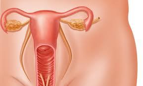 Внутриматочные контрацептивы могут приостанавливать развитие рака матки