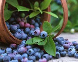 Какие травы помогут снизить сахар в крови?