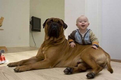 Лучший подарок для ребёнка, завести ему лучшего друга – собаку