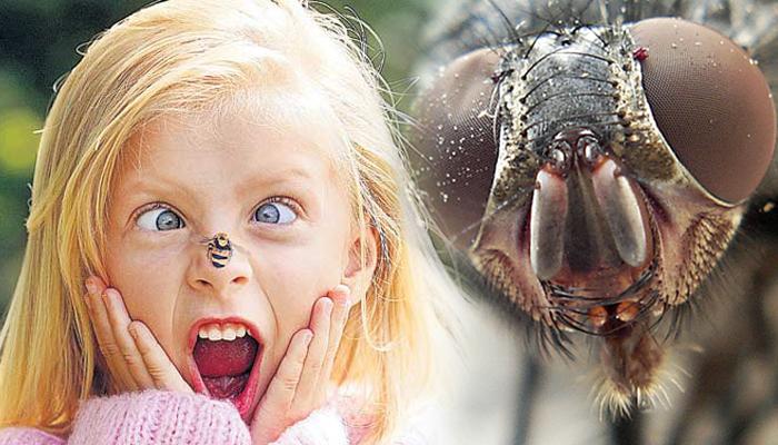 Аллергия, вызываемая насекомыми