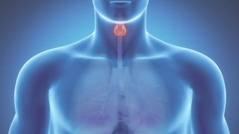 Что нарушает работу щитовидной железы