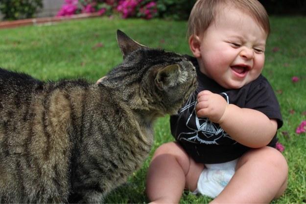 Почему стоит завести кошку?