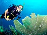 Морские губки скрывают ключ к лечению рака