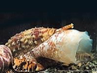 Морские улитки подарят уникальную замену инсулина