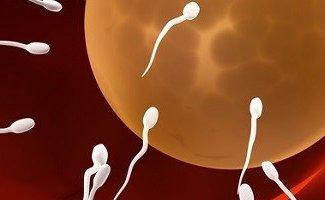 Процесс зачатия ребенка: что он подразумевает?