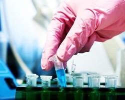 Победа над раком зависит от бактерий в организме